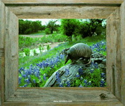 Armadillo and Bluebonnets  Barnwood Frame