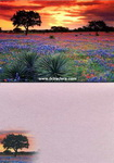 Texas Greeting Cards - Texas Sunrise and Bluebonnets