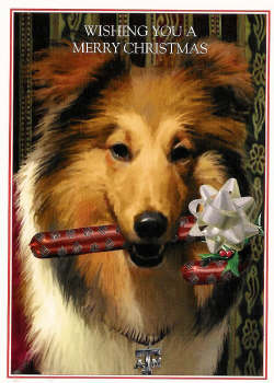 Christmas Cards-Texas A&M Reveille with Candy Cane