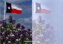 Texas Greeting Cards - Texas Flag & Texas Bluebonnets