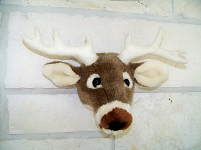 Texas White Tail Deer Head Mount-Not So Life Size
