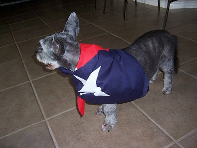 Texas Flag Dog Bandana - Texas Dog Bandana