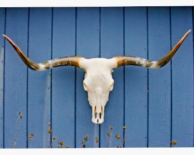 "SOLD! Texas Longhorn Skull - ""Dazzle"""